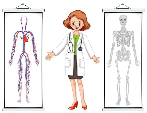 Dottore e due diagrammi del sistema umano
