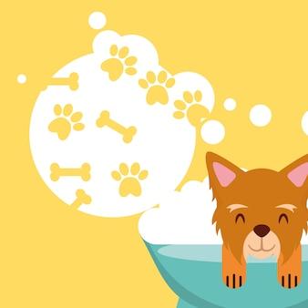 Dog in bath grooming bubbles paw bone love pet domestic