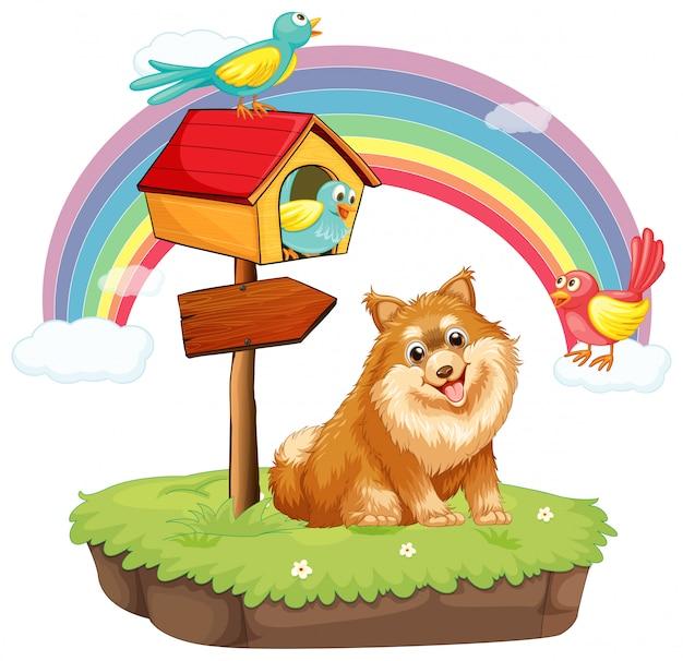 Dog and birdhouse
