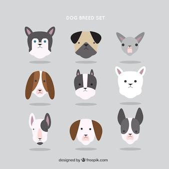 フラットなデザインの犬の品種のコレクション