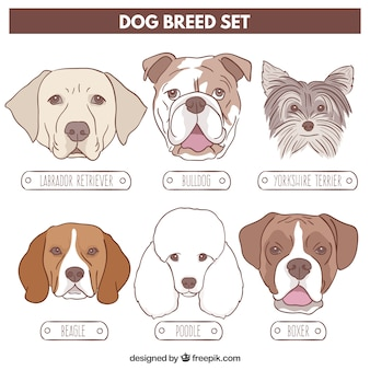 Dog breed drawn set