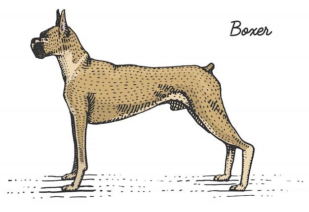개 품종 새겨진 목 판 scratchboard 스타일, 빈티지 종 손으로 그린 그림.