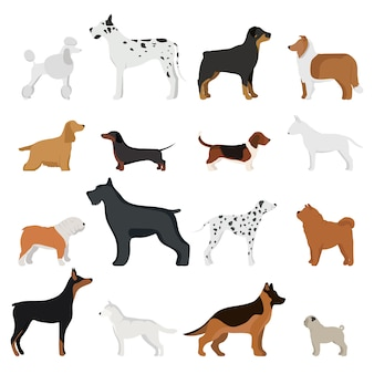 Dog breed vector illustration