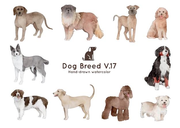 개 품종 수채화 그림