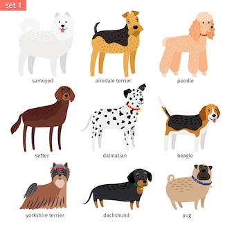 Dog breeds cartoon icon
