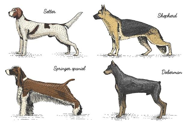 Породы собак выгравированы, рисованной иллюстрации в стиле гравюры на дереве