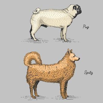 犬の品種が刻まれた、木版画のスクラッチボードスタイルの手描きイラスト