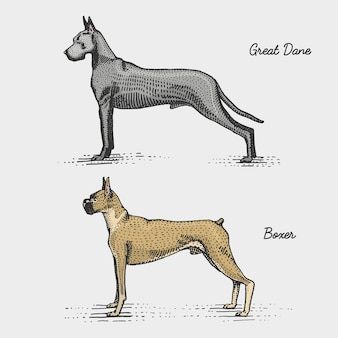 Dog breeds engraved, hand drawn illustration in woodcut scratchboard style