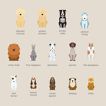Dog breeds set, large and medium size, front view