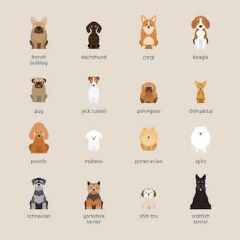 Dog breeds set, small and medium size, front view