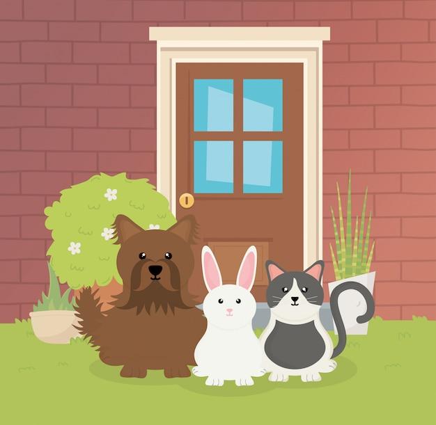 家の庭のペットの世話で犬猫とウサギ