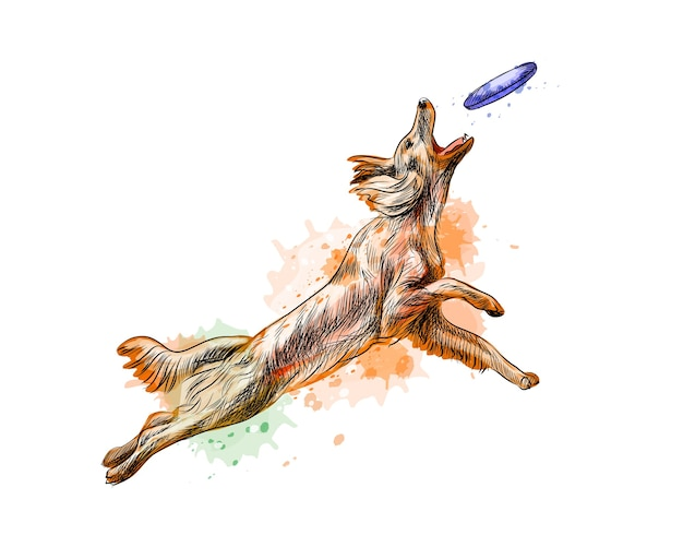 Dog catching flying disk from a splash of watercolor, hand drawn sketch.  illustration of paints
