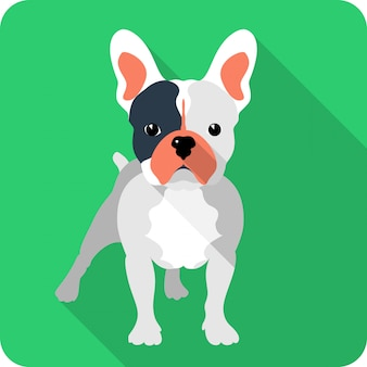 Dog french bulldog clipart flat design