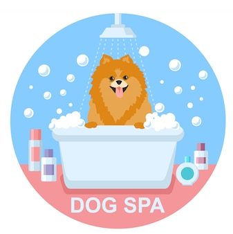 Dog grooming. dog spitz wash. dog spa