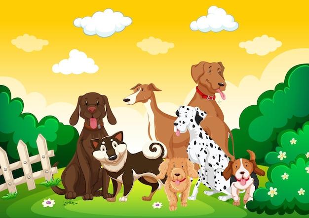 ガーデンシーンの犬のグループ