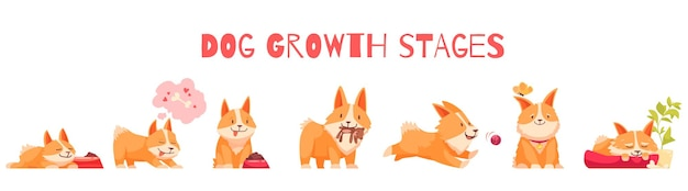 Dog growth stages composition with set of isolated cartoon style characters of puppy with editable text illustration