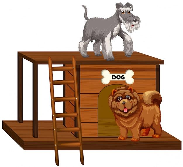 分離されたかわいい犬と犬小屋