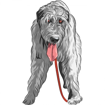 Собака породы ирландский волкодав