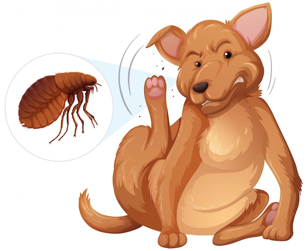 Dog itching flea concept