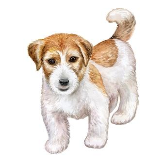Собака джек рассел терьер грубый, изолированные на белом. акварель.
