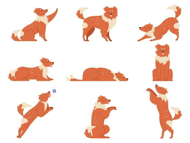 Dog movement. funny dogs activities, cute animal character in various poses running, playing and sleeping. dogs action training and tricks   illustration set