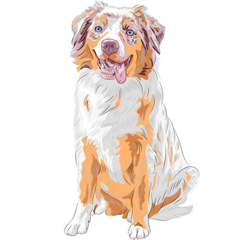 Dog red australian shepherd breed
