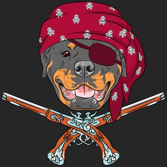 犬のロットワイラー海賊と拳銃