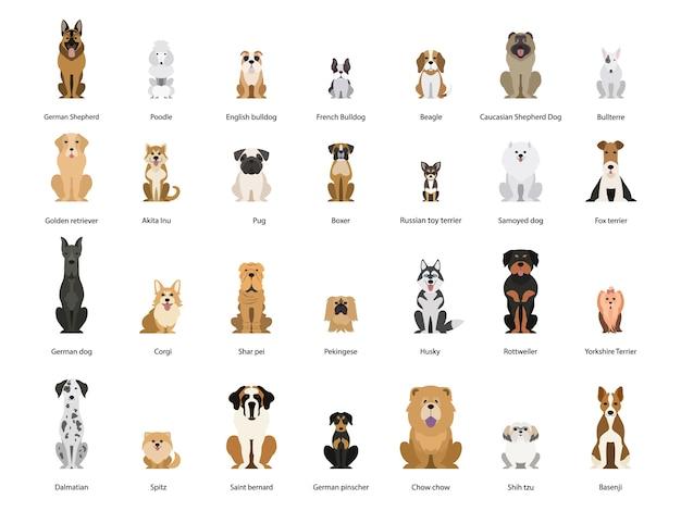 개 세트. 다양한 품종의 개 컬렉션. 귀여운 재미있는 국내 애완 동물. 달마시안과 독일 셰퍼드. 동물의 그룹.