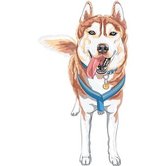Собака сибирской хаски породы