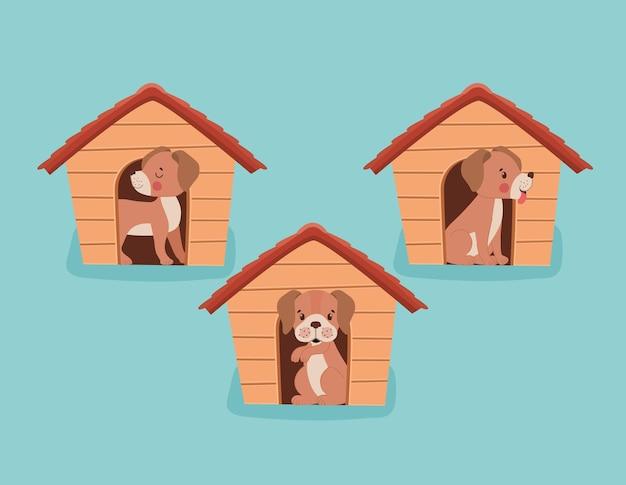 Собачьи будки с щенками