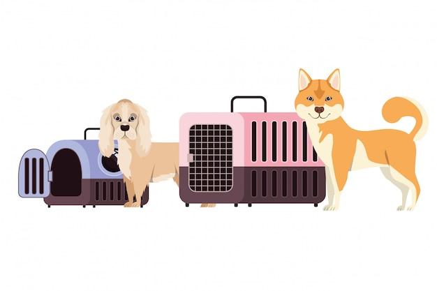 Ящики для перевозки собак и домашних животных на белом