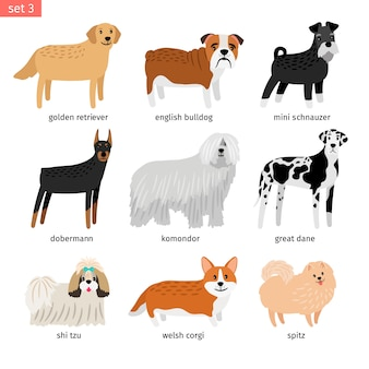 Dogs breeding collection isolated
