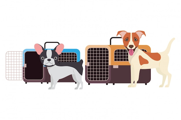 Dogs and pet transport boxes on white