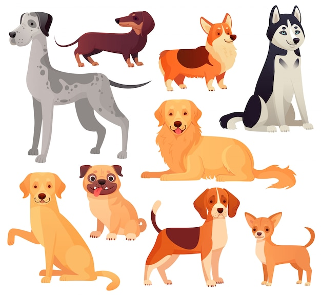 Dogs pets character. labrador dog, golden retriever and husky. cartoon isolated set
