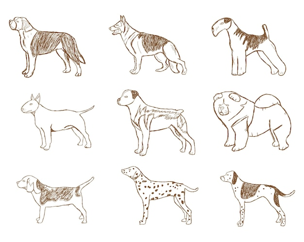 Dogs set. vector illustration. cartoon sketch isolated on white background.
