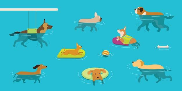 Собаки купаются в воде или бассейне