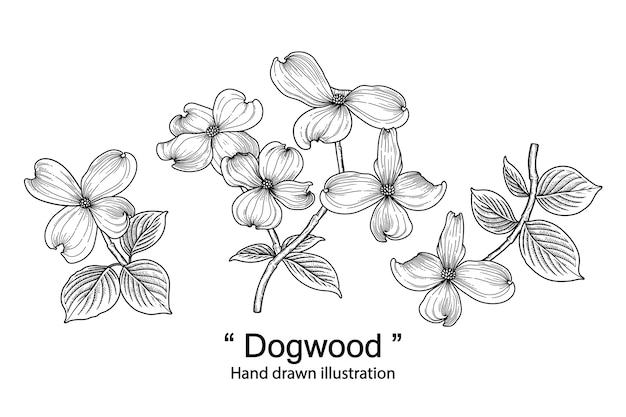 Dogwood flower decorative set isolated on white