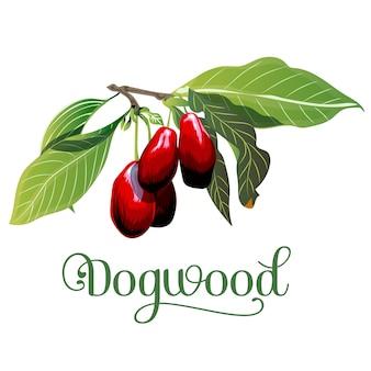 Собаки листья и ягоды, изолированных на белом фоне.