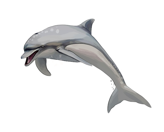 Dolphin from a splash of watercolor, colored drawing .