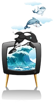 Dolphines swimming and jumping on tv
