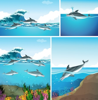 Dolphins swimming in the ocean in different scenes