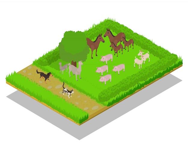 Domestic animal concept scene