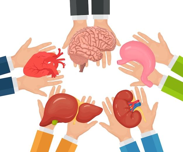 Пожертвование органов. руки врача держат донорскую почку, сердце, печень, желудок, мозг для трансплантации