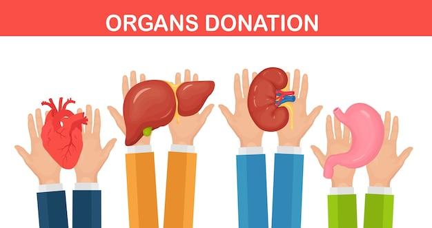 Donation organs. doctors hands hold donor kidney, heart, liver, stomach for transplantation