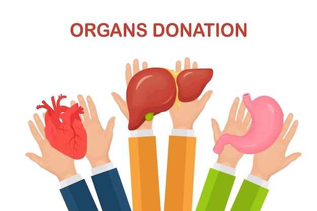 Пожертвование органов. руки врачей держат донорский желудок, сердце, печень для трансплантации. волонтерская помощь