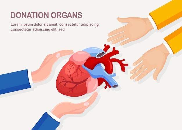 기증 기관. 심장 이식을위한 기증자 심장. 환자를위한 자원 봉사 지원