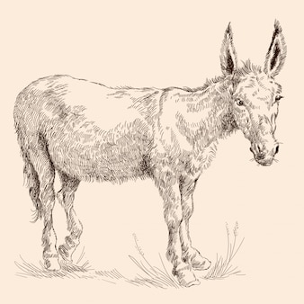 Donkey in the grass.