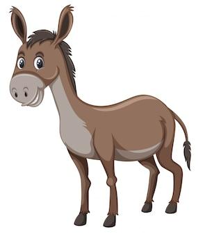 A donkey on white background