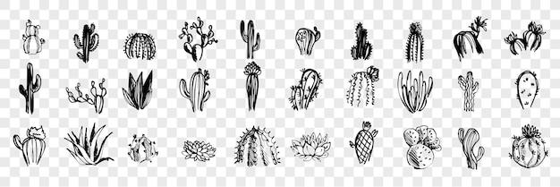 낙서, 스케치, 손으로 그린 선인장 세트 컬렉션. 펜 또는 연필, 잉크 손으로 그린 다양한 선인장. 고립 된 다른 이국적인 사막 식물의 스케치입니다.