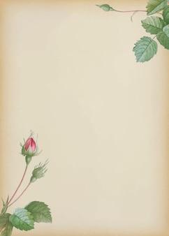 ベージュの背景に二重の苔のバラ